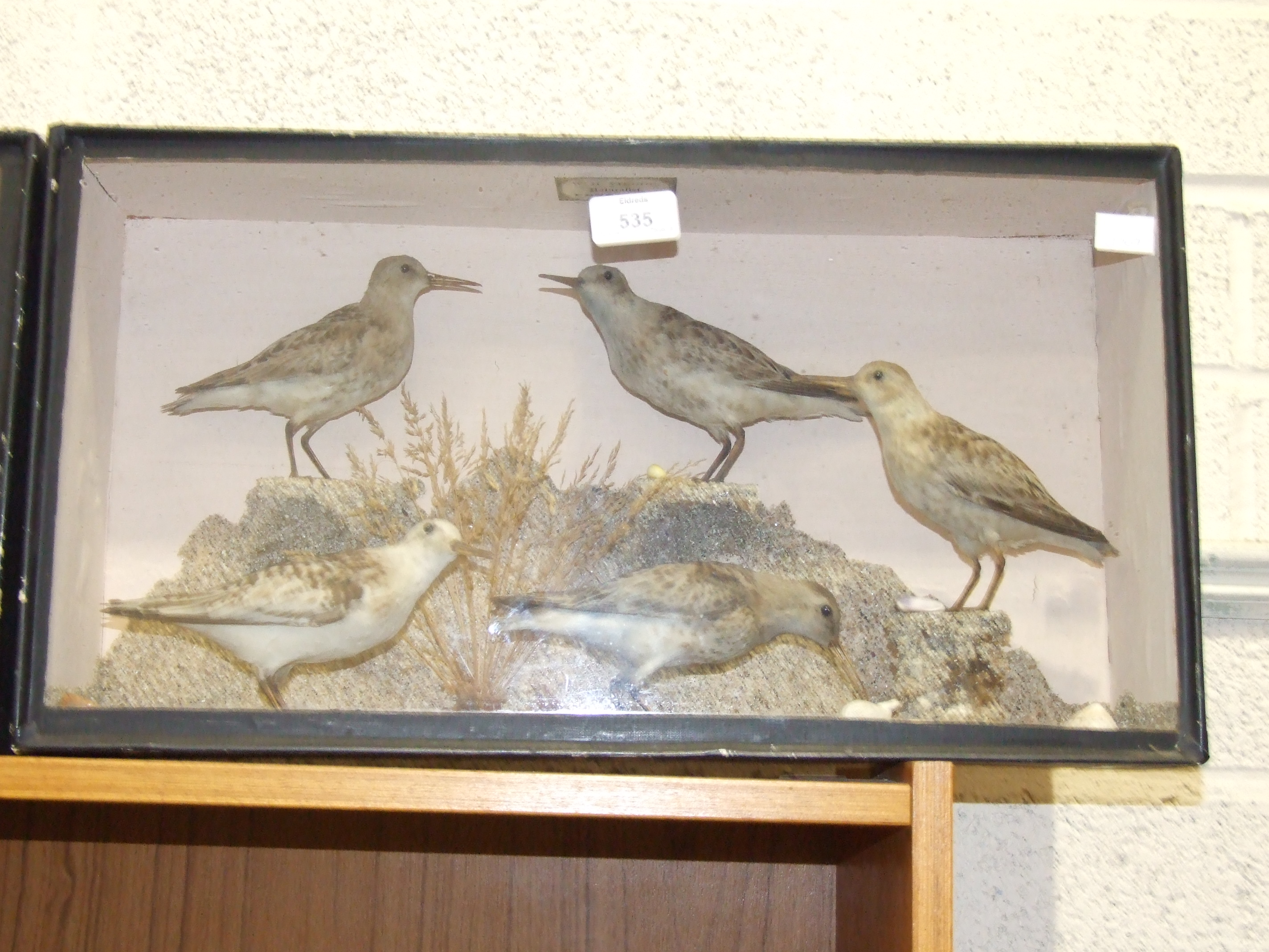 Lot 535 - Two glazed cases containing taxidermied shoreline waders, labelled 'WH Vingoe', approximately 50 x