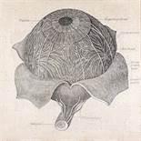 Heiko Bressnik * (Villach 1961 geb.) Ohne Titel (Dürers Auge) Holz, Polyester und Heftklammern auf