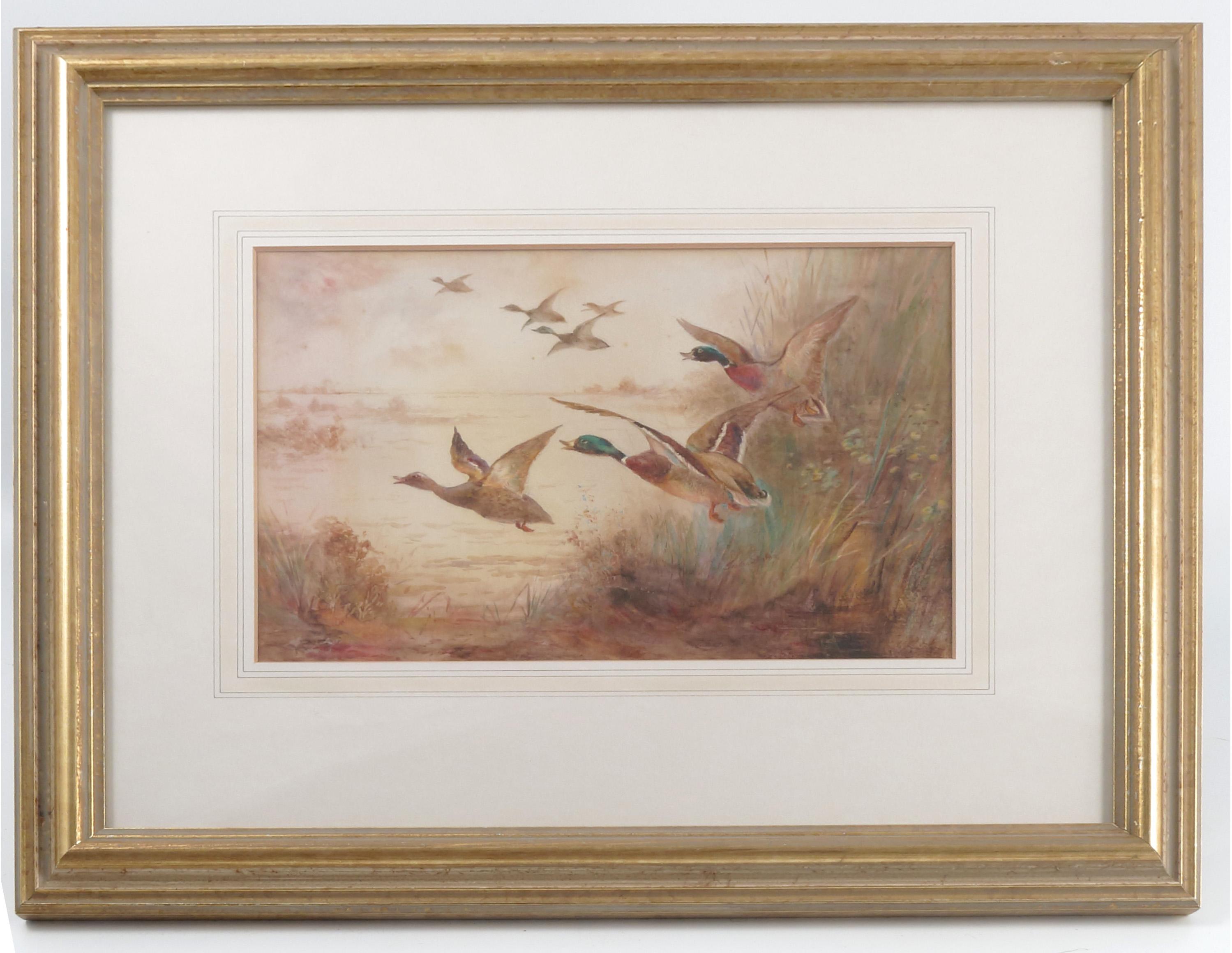 James Stinton, watercolour, mallard ducks in flight, 6.75ins x 9.