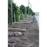 LOT OF CONCRETE PIPE SLEEPERS (APPROX. 23), ROW 1, 15'L.