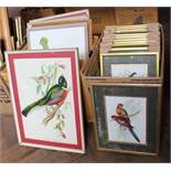 Seventeen various coloured ornithological prints after Gould (two boxes)