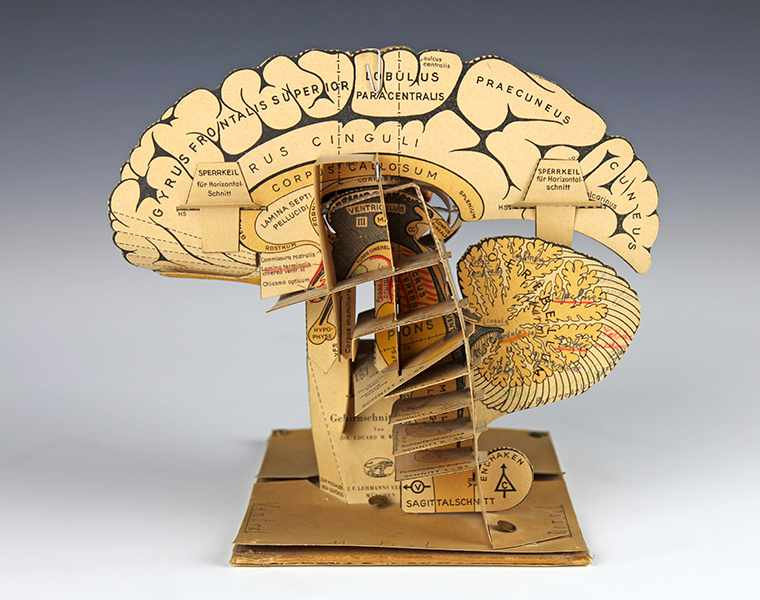 Lot 50 - Medizin - - Anatomisches Papiermodell vom menschlichen Gehirn. München um 1930,