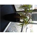 *Fern Plant in Square Pot