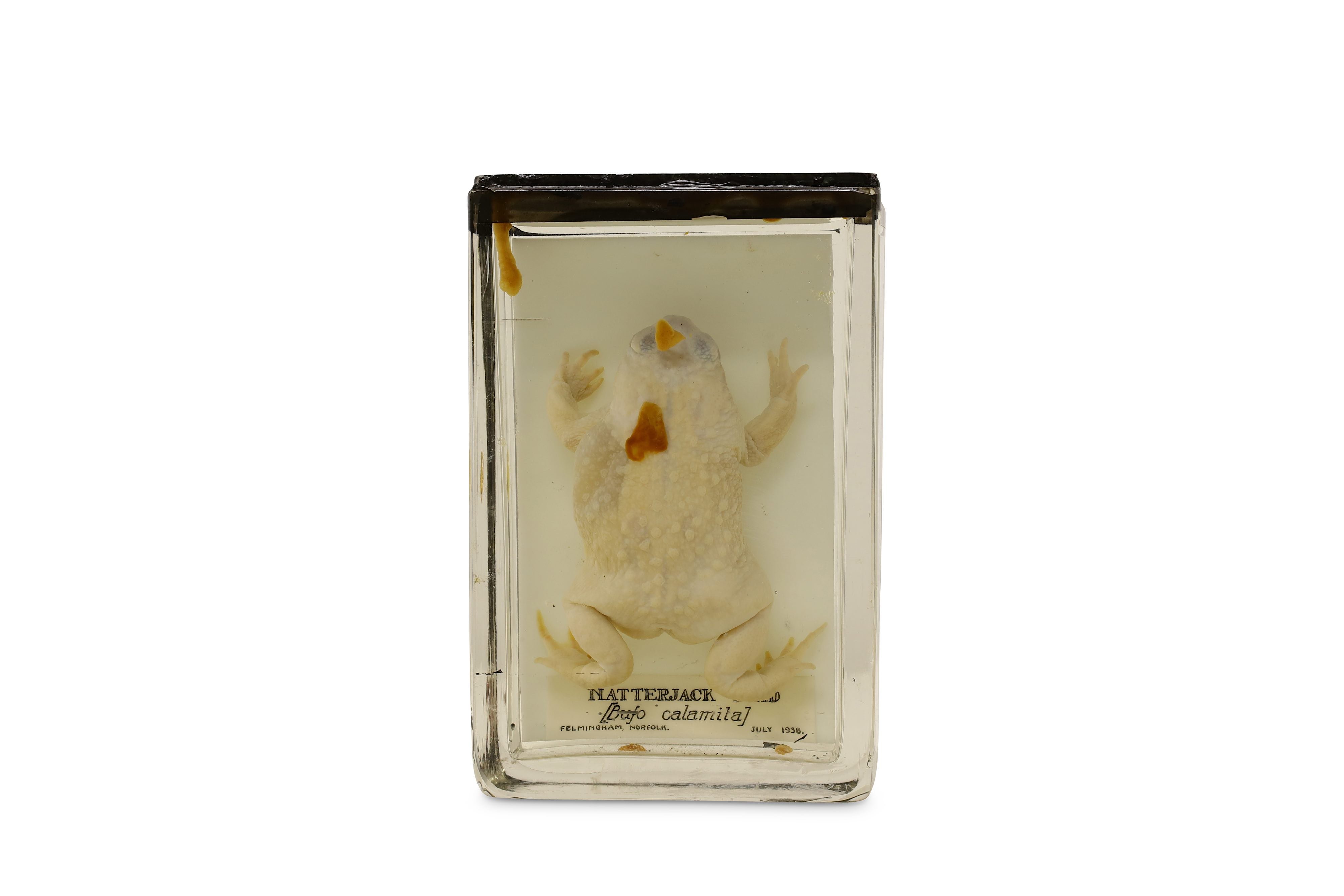 Lot 20 - TAXIDERMY: A COLLECTION OF NINE LATE 19TH / EARLY 20TH CENTURY EX-MUSEUM WET / PICKLED SPECIMENS IN