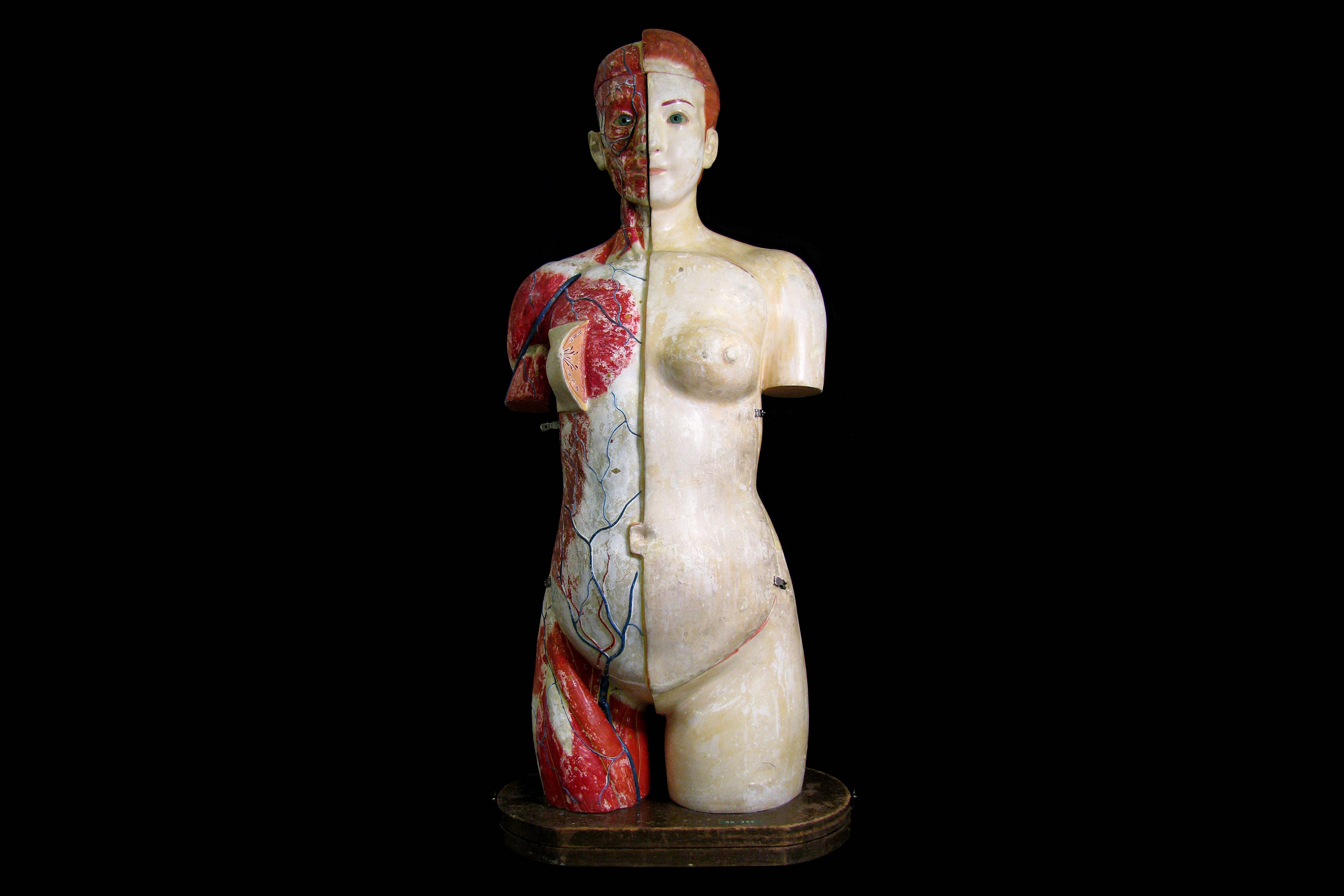 A FINE 1930'S JAPANESE LIFE-SIZE ANATOMICAL MODEL TORSO OF THE FEMALE FIGURE PRODUCED IN 1934 BY THE - Image 2 of 9