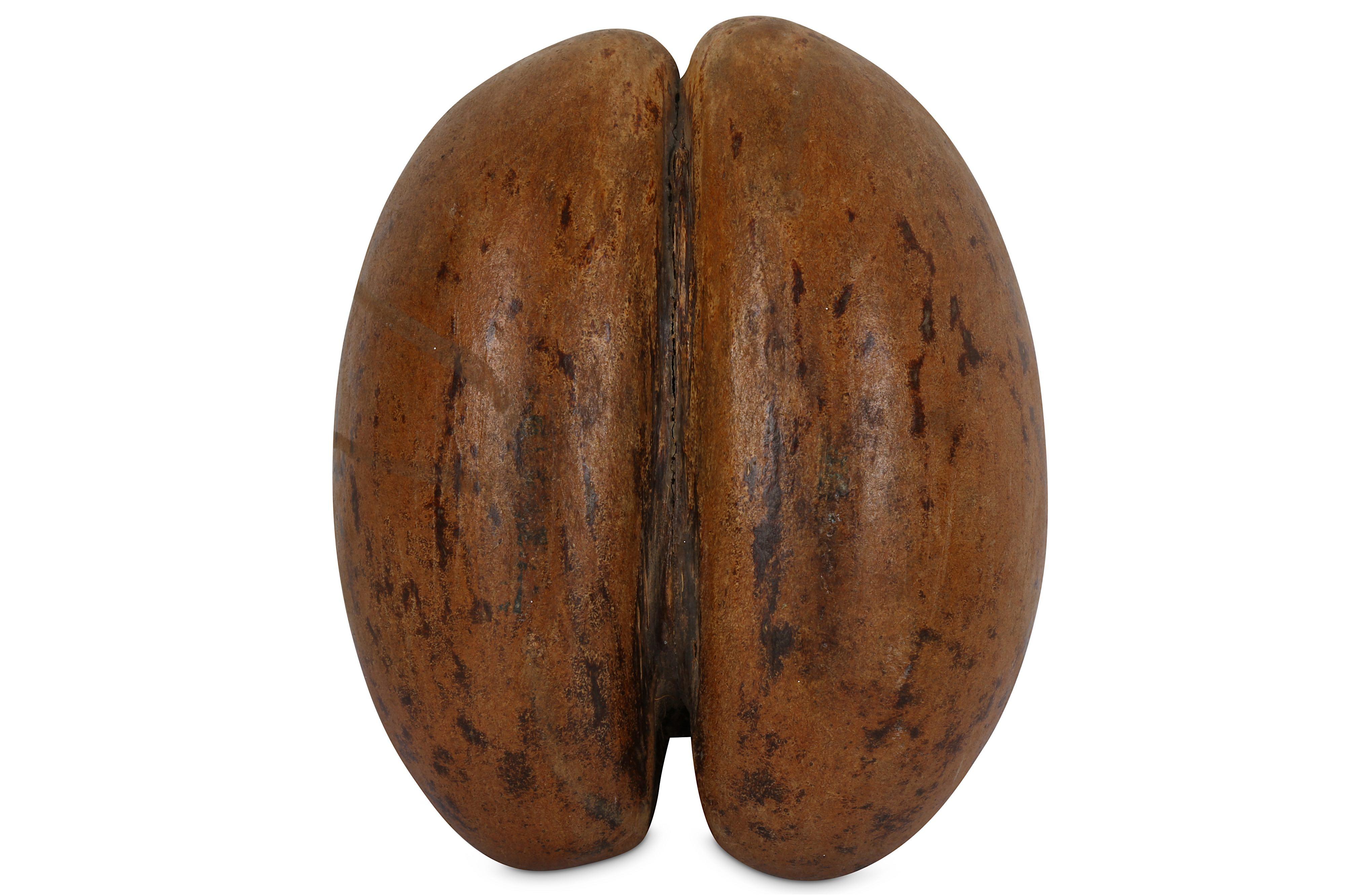 A POLISHED COCO DE MER NUT (LODOICEA MALDIVICA) - Image 3 of 3