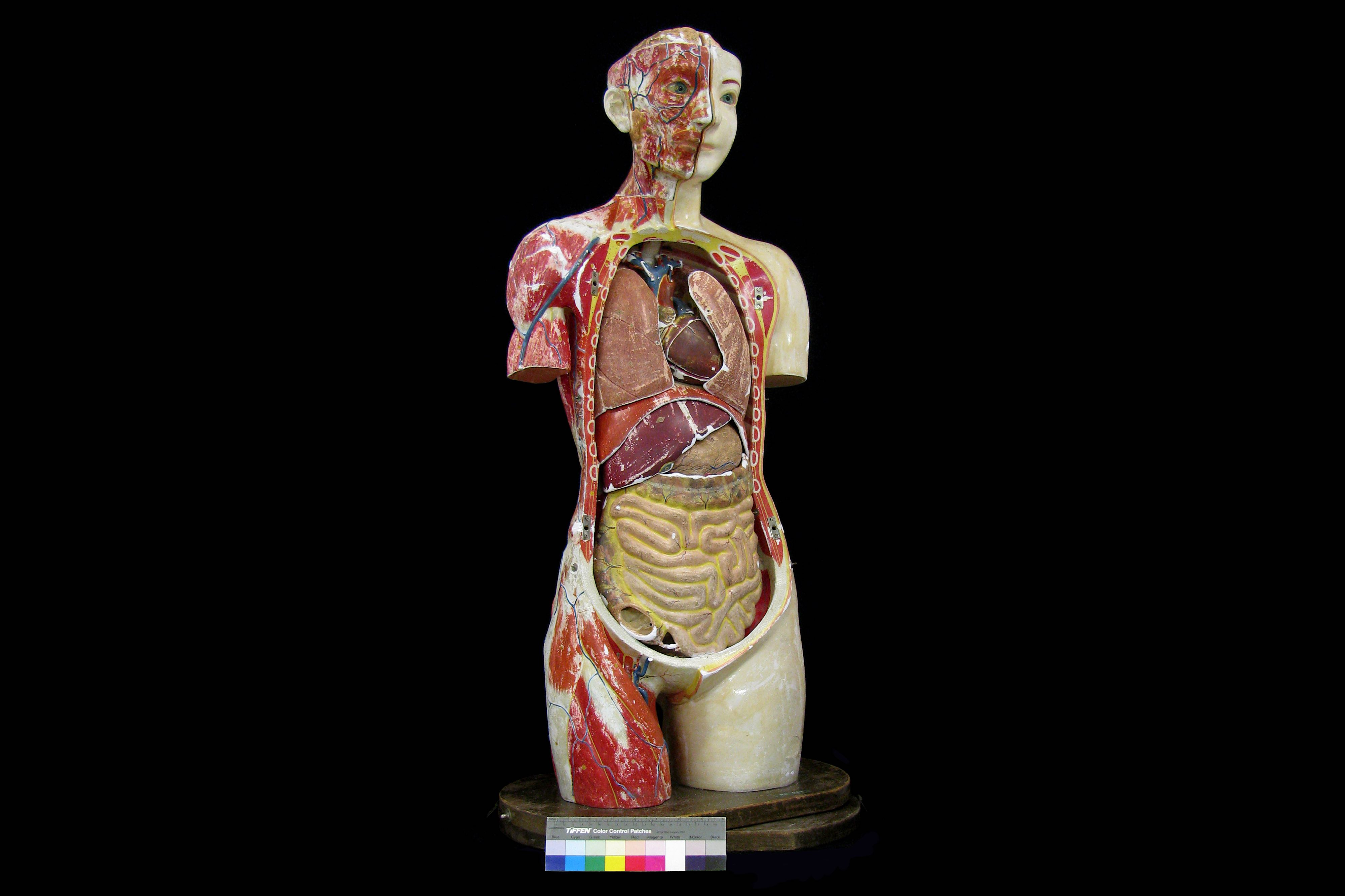 A FINE 1930'S JAPANESE LIFE-SIZE ANATOMICAL MODEL TORSO OF THE FEMALE FIGURE PRODUCED IN 1934 BY THE - Image 8 of 9