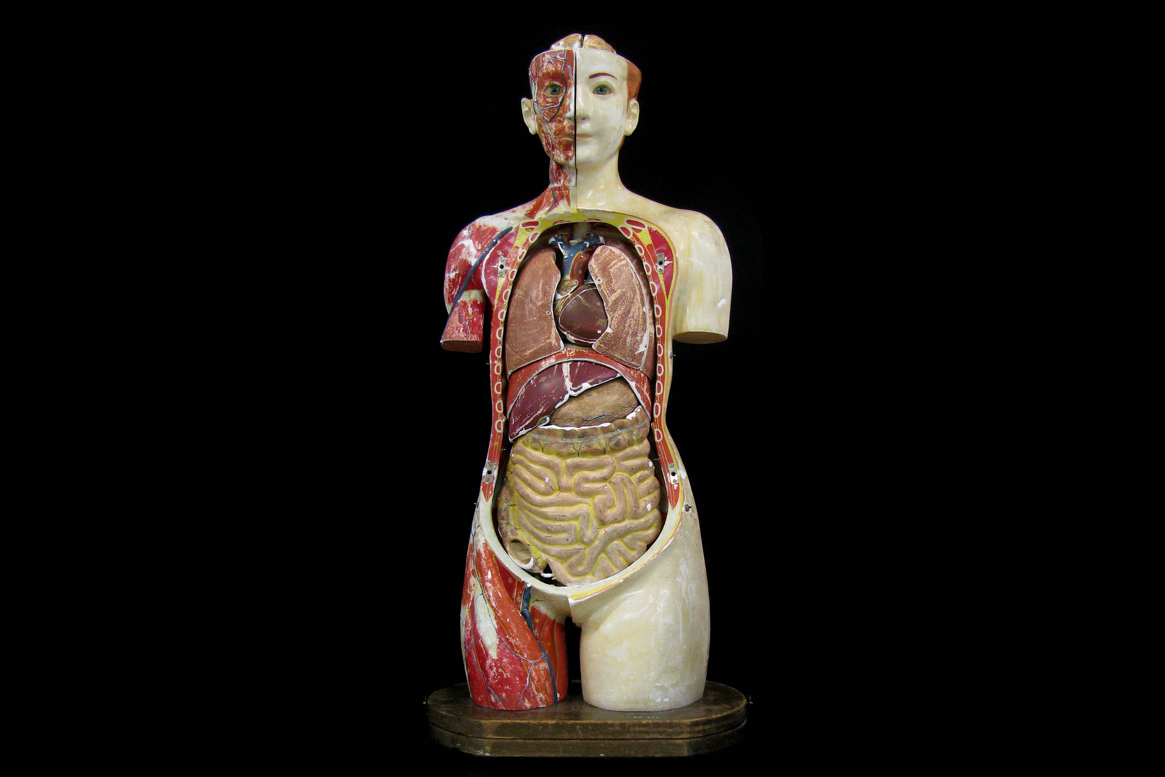 A FINE 1930'S JAPANESE LIFE-SIZE ANATOMICAL MODEL TORSO OF THE FEMALE FIGURE PRODUCED IN 1934 BY THE