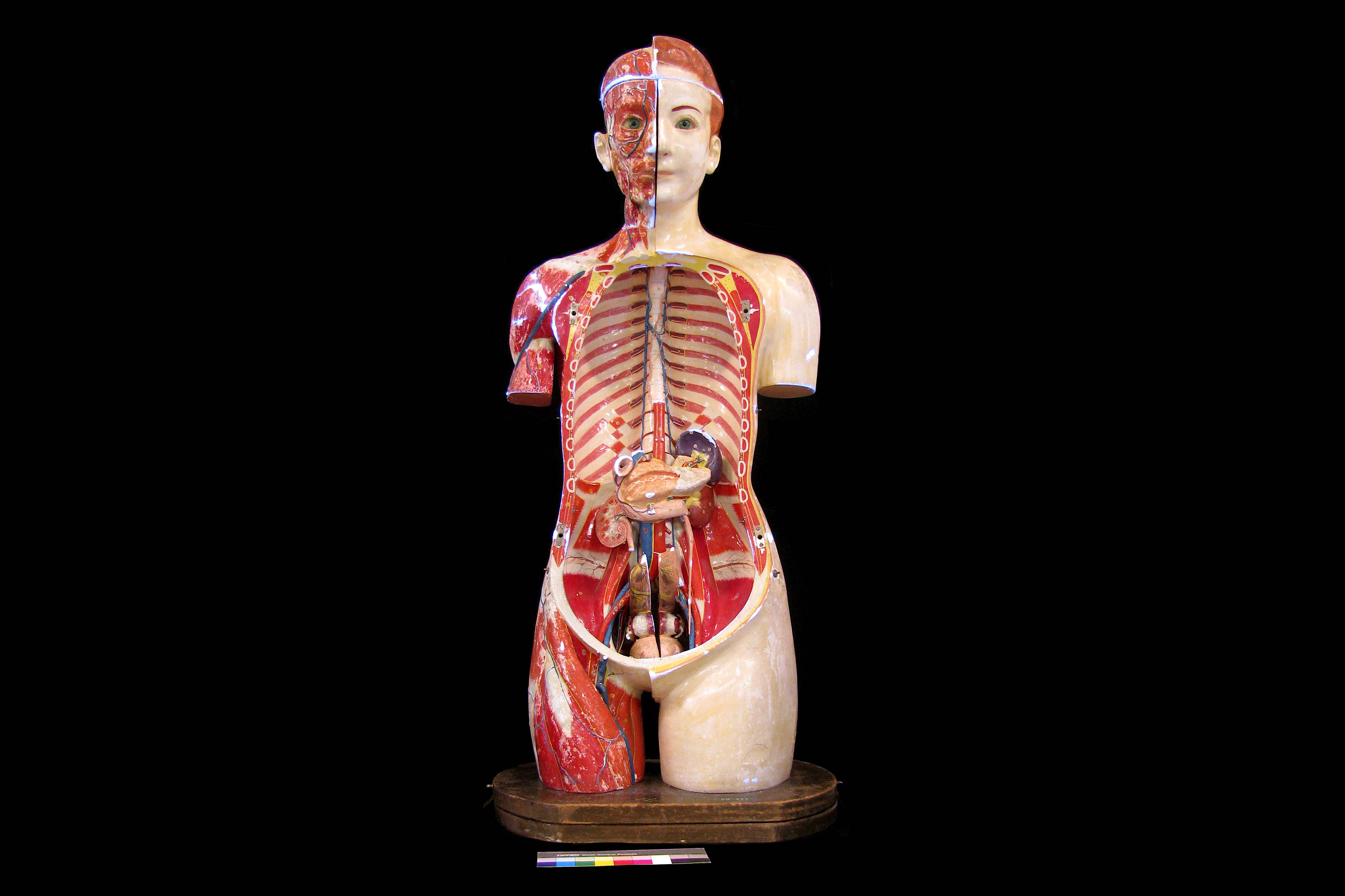 A FINE 1930'S JAPANESE LIFE-SIZE ANATOMICAL MODEL TORSO OF THE FEMALE FIGURE PRODUCED IN 1934 BY THE - Image 9 of 9
