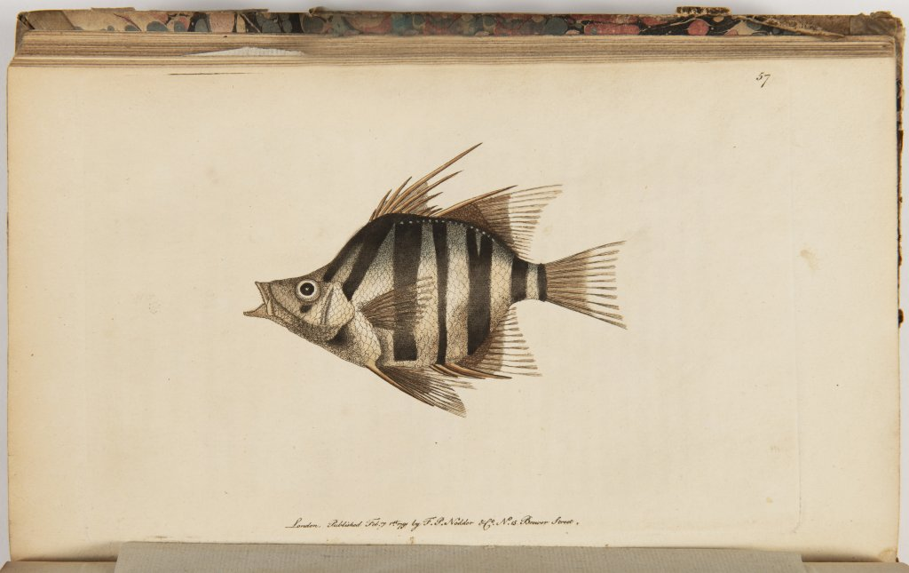 GEORGE SHAW 1751 - 1813: VIVARIUM NATURAE OR THE NATURALIST'S MISCELLANY. VOL. I-III 1790 United - Image 5 of 9