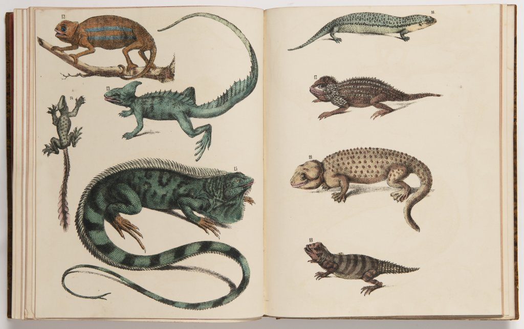 THOMAS DRIENDL 1849 - 1916: A GROUP OF FIVE BOOKS, EACH WITH THEIR OWN TITLE PAGES, BOUND IN A - Image 9 of 10