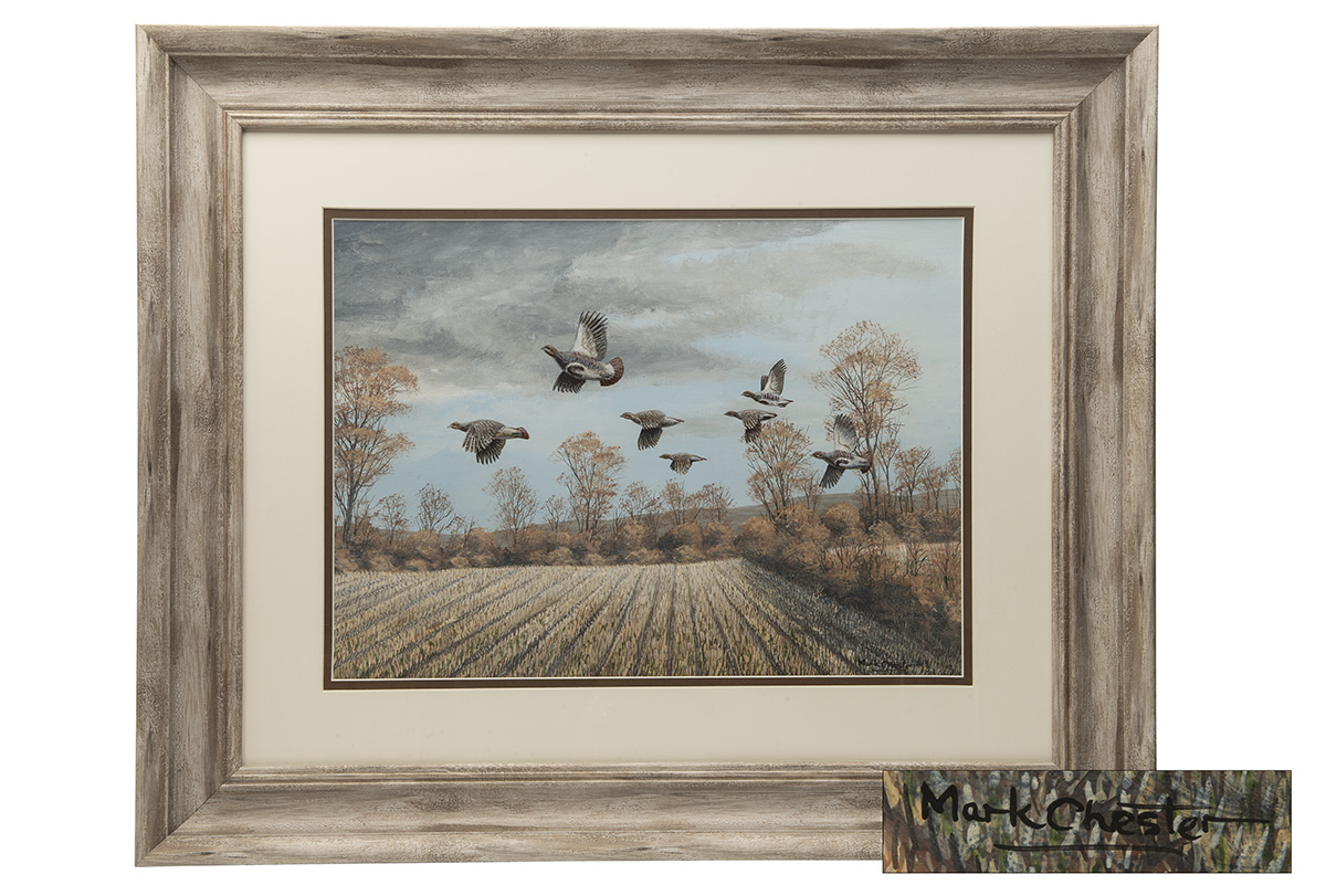 Lot 56 - MARK CHESTER (F.W.A.S.) 'AUTUMN FLIGHT' ENGLISH PARTRIDGES, an original painting signed by the