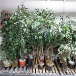 (Lot) Artificial Plants
