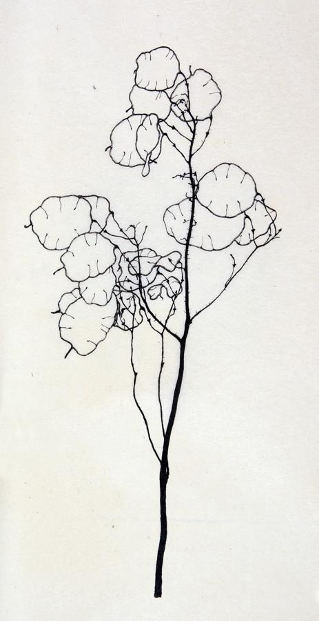 Alexander Olbricht. Sechs Pflanzenzeichnungen. Lithographien nach Originalen im Städtischen Museum