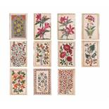 A GROUP OF ELEVEN FLOWER AND TREE MINIATURE PAINTINGS – INDIA 19th CENTURYWatercolors and gold paint
