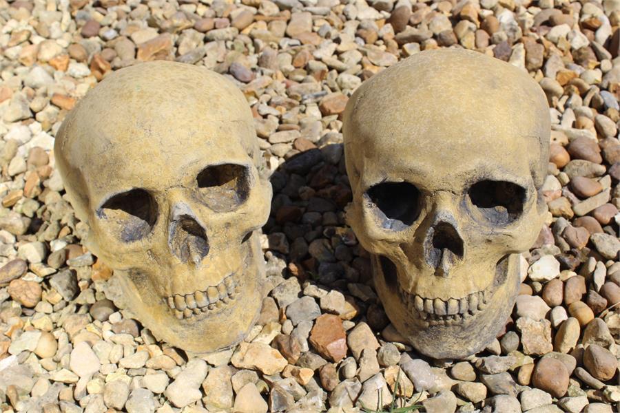Lot 14 - weatherproof pair of skulls