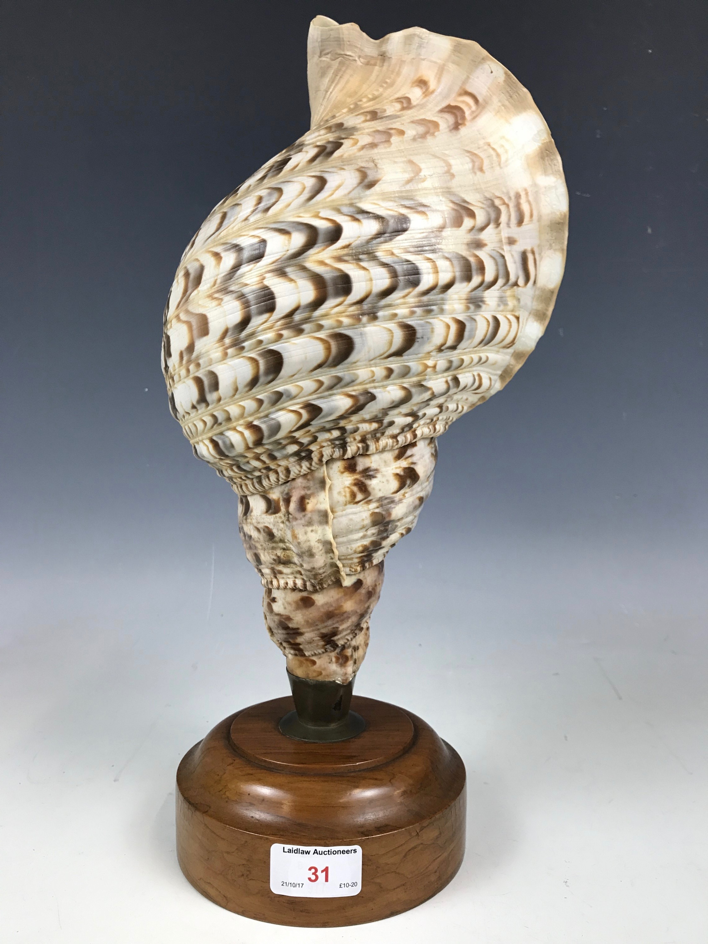 Lot 31 - A vintage conch shell lamp base
