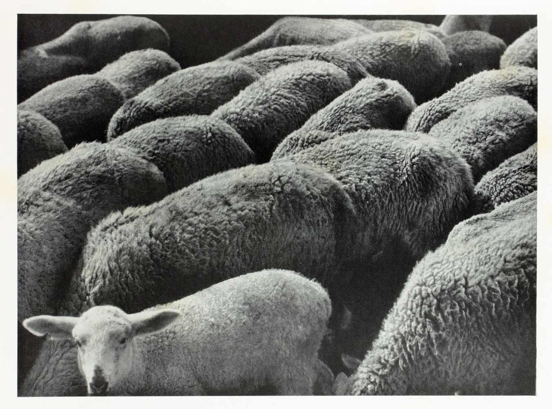 Albert Renger-Patzsch. Die Welt ist schön. Einhundert photographische Aufnahmen. Herausgegeben und - Image 3 of 6