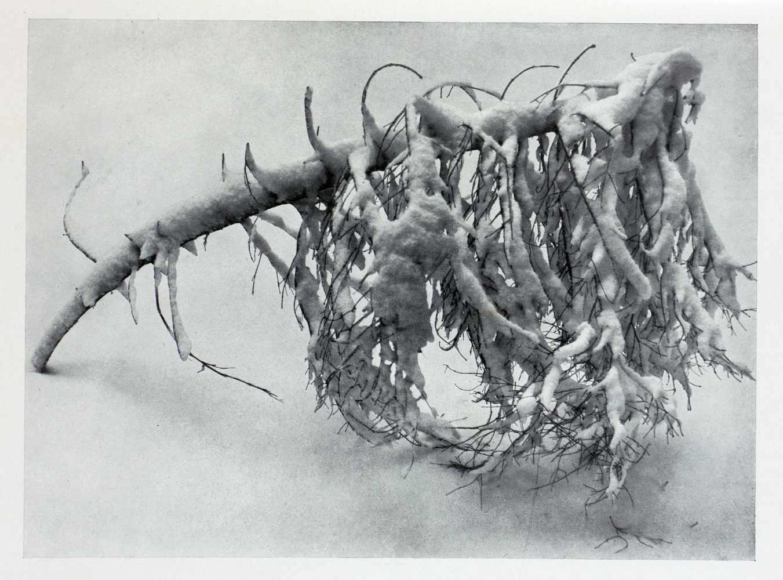 Albert Renger-Patzsch. Die Welt ist schön. Einhundert photographische Aufnahmen. Herausgegeben und - Image 4 of 6