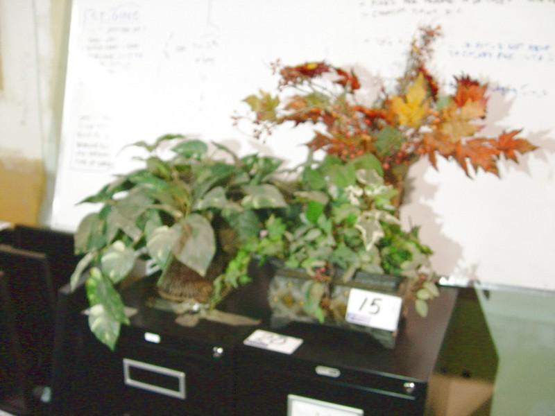 Lot 15 - 3 PLANTS