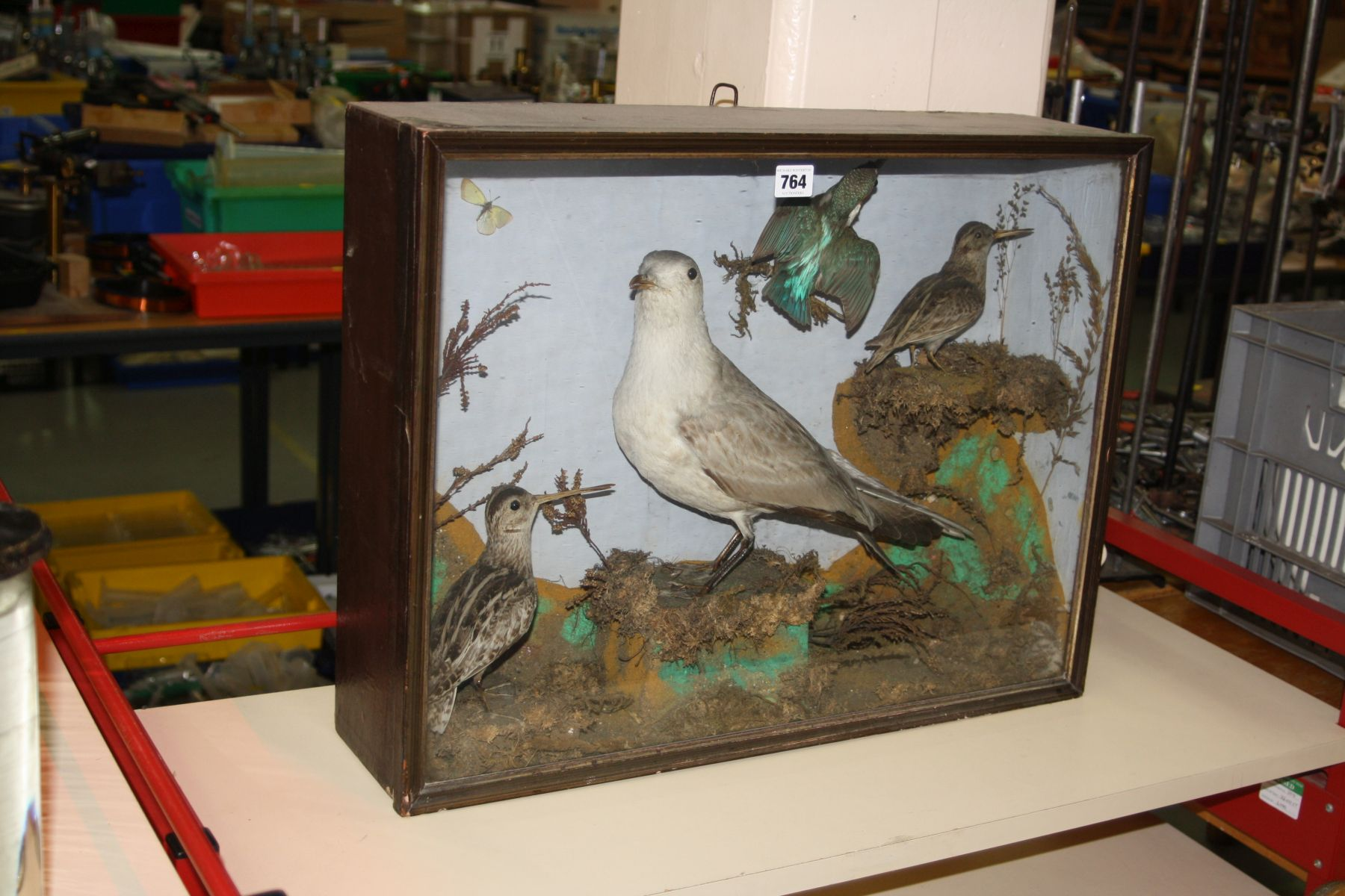 TAXIDERMY - a Victorian glazed case containing a gull, kingfisher and two other birds in a