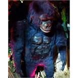 Gorilla by Christian Hoffmann