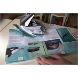 Whales Giants of the Seas. Pop-up book