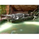 Crocodile by Christian Hoffmann