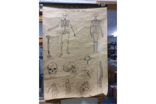 Wall chart posters of Anatomy & Physiology based on Warwick ...