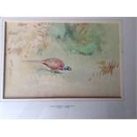 Framed original watercolour pheasant. Roland green