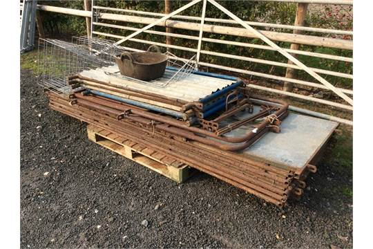 Poldenvale sheep race with gates, 6ft x 9ft hurdles and 6 lamb