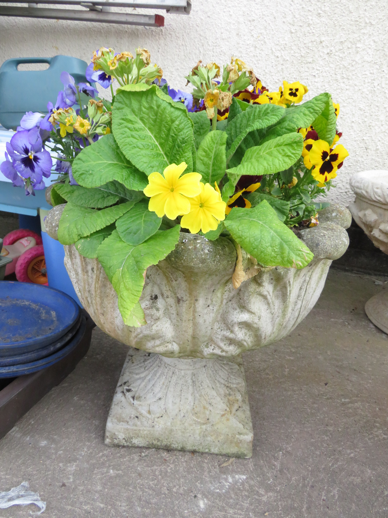 Lot 5 - TWO CIRCULAR POTS DECORATED WITH ACANTHUS LEAVES WITH CONTENTS OF PANSIES AND PRIMULA