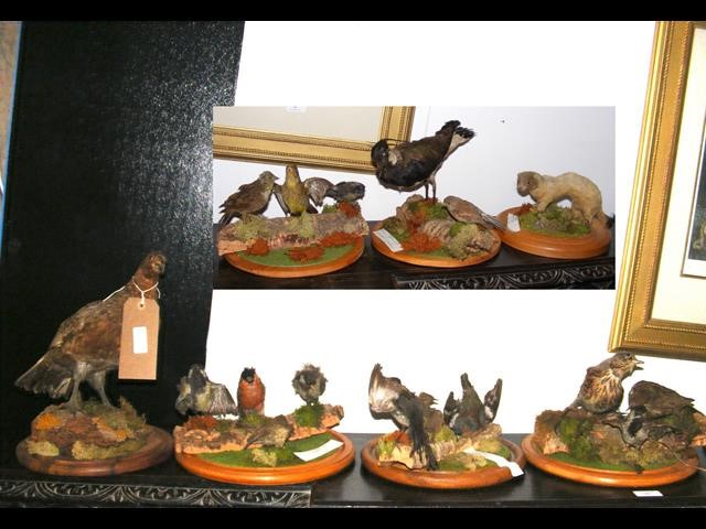Lot 47 - Six stuffed and mounted bird montages, together wi