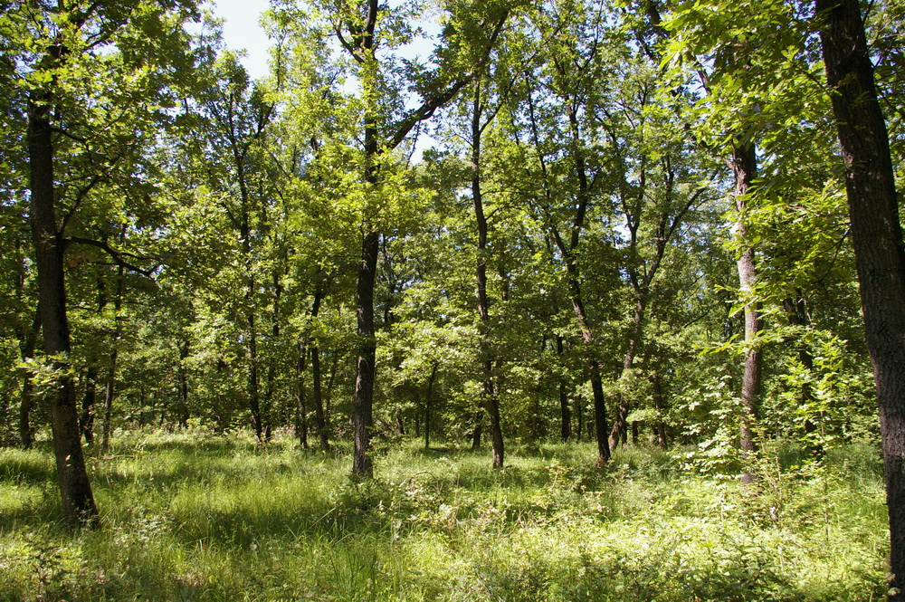 8 000 Sqm Forest Plot Located In Vurtop Vidin Region