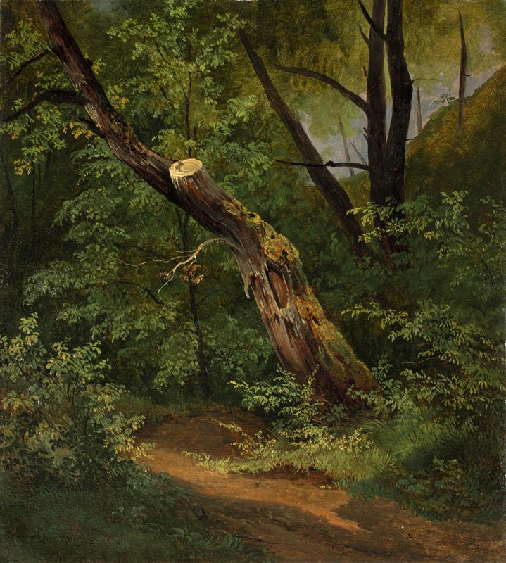 Lot 141 - Österreichisch, um 1830 ()BAUMSTUDIE. Öl auf Papier.  38,7x34,6cm ( 15¼x13?in.).