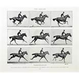 Eadweard Muybridge. Animals in Motion. - The Human Figure in Motion. - An Electro-Photographic