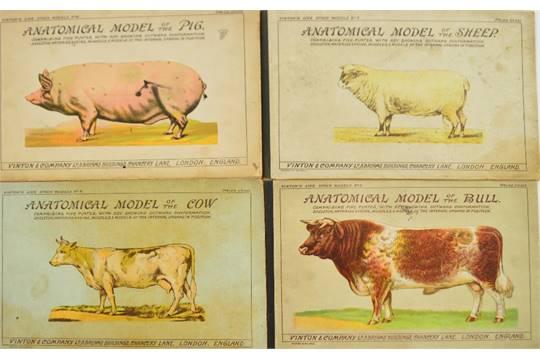 Four Vintage Vinton Co Ltd Anatomical Livestock Models With Pop