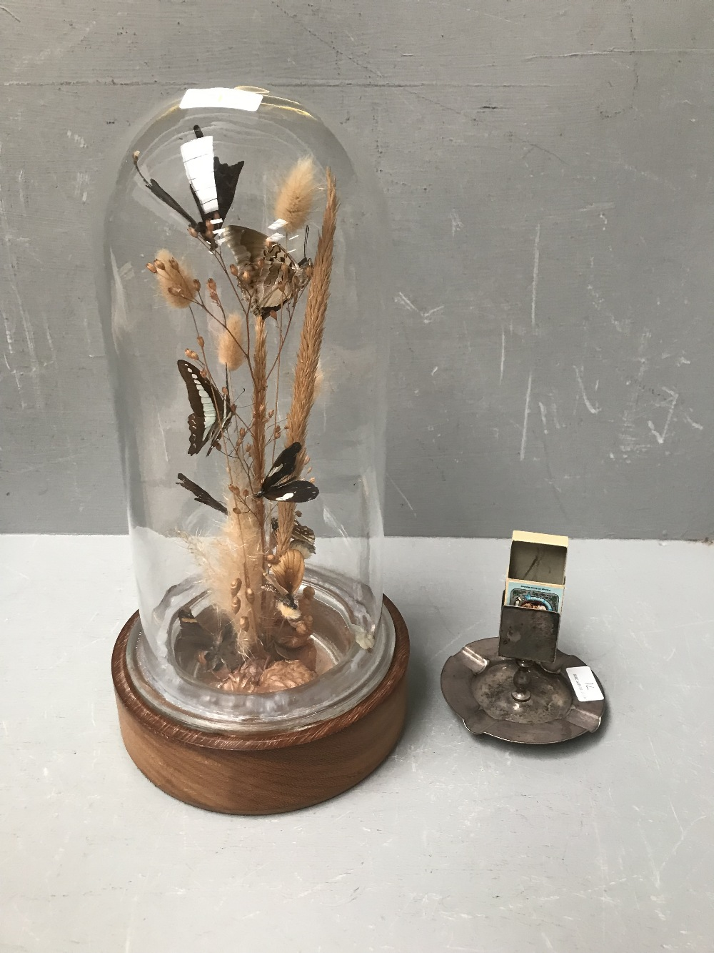 Lot 71 - Cylindrical glass case on a wooden stand 40 cm containing butterflies on grasses & white metal