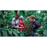 Own a Coffee Yielding Tree on the Paddy & Scott's Meru Farm in Kenya Unique opportunity to join