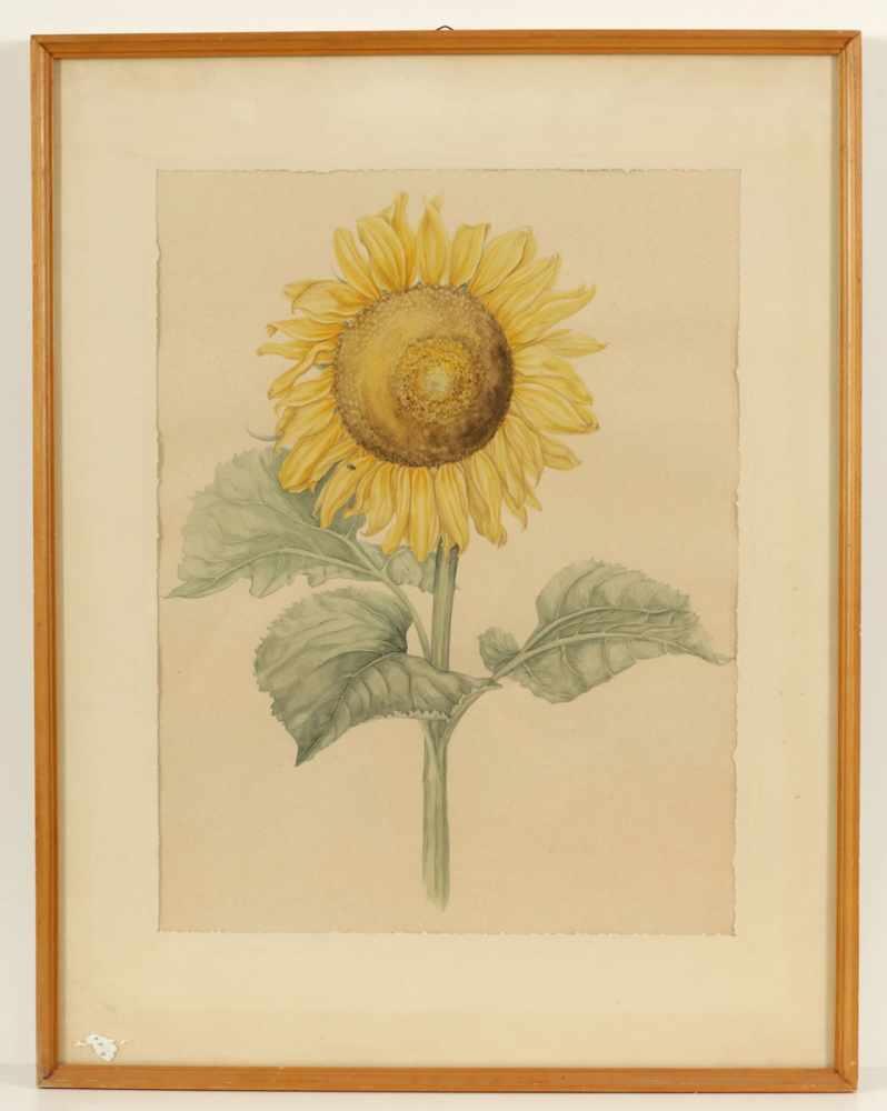 """Lot 54 - Künstler des 20. Jahrhunderts- """"Sonnenblume"""" - Aquarell/Papier. 56 x 42,5 cm ("""