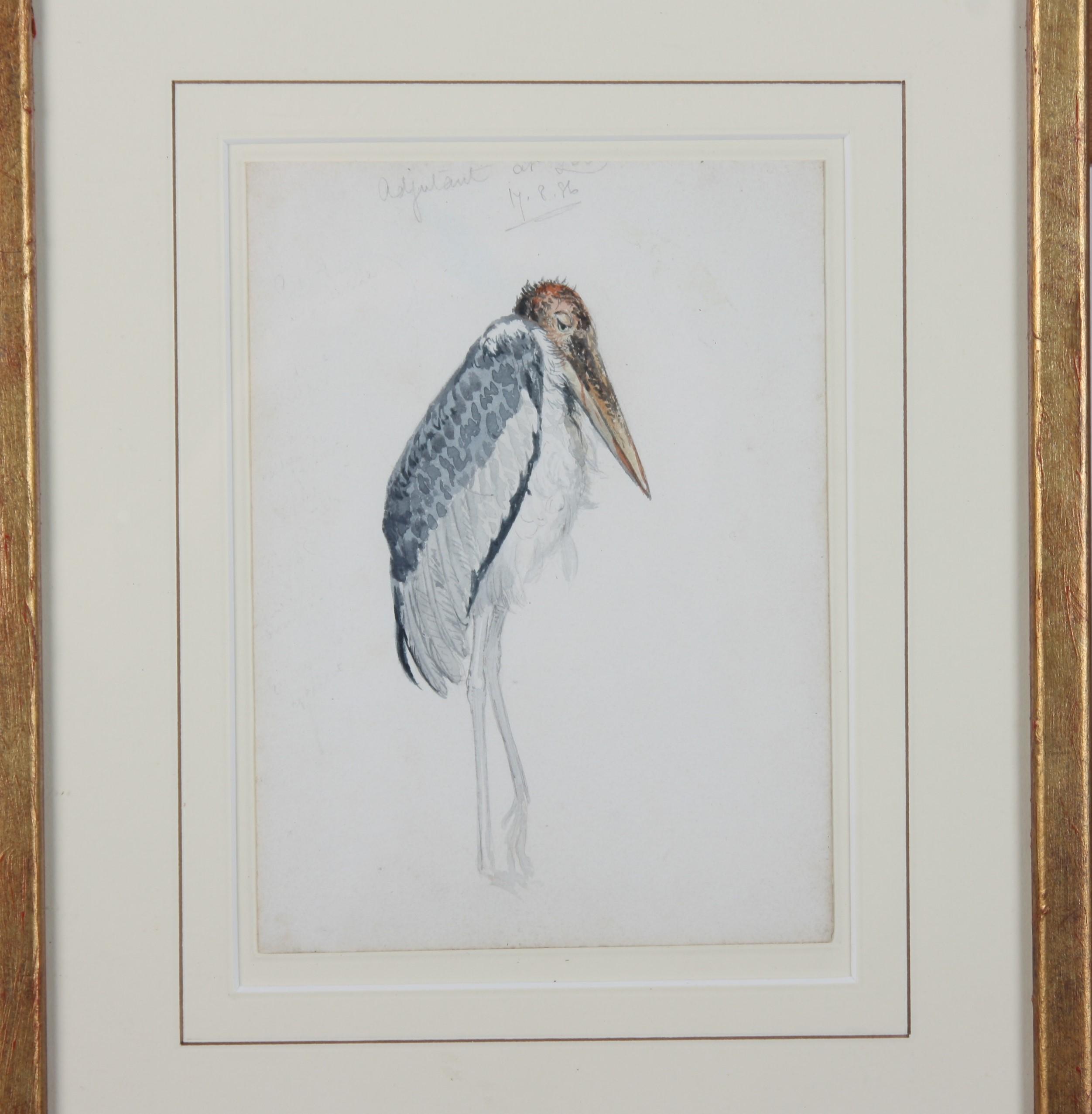Lot 98 - Edward LEAR (1812-1888) Adjutant Bird Watercolour Partial signature Inscription and date 17.8.