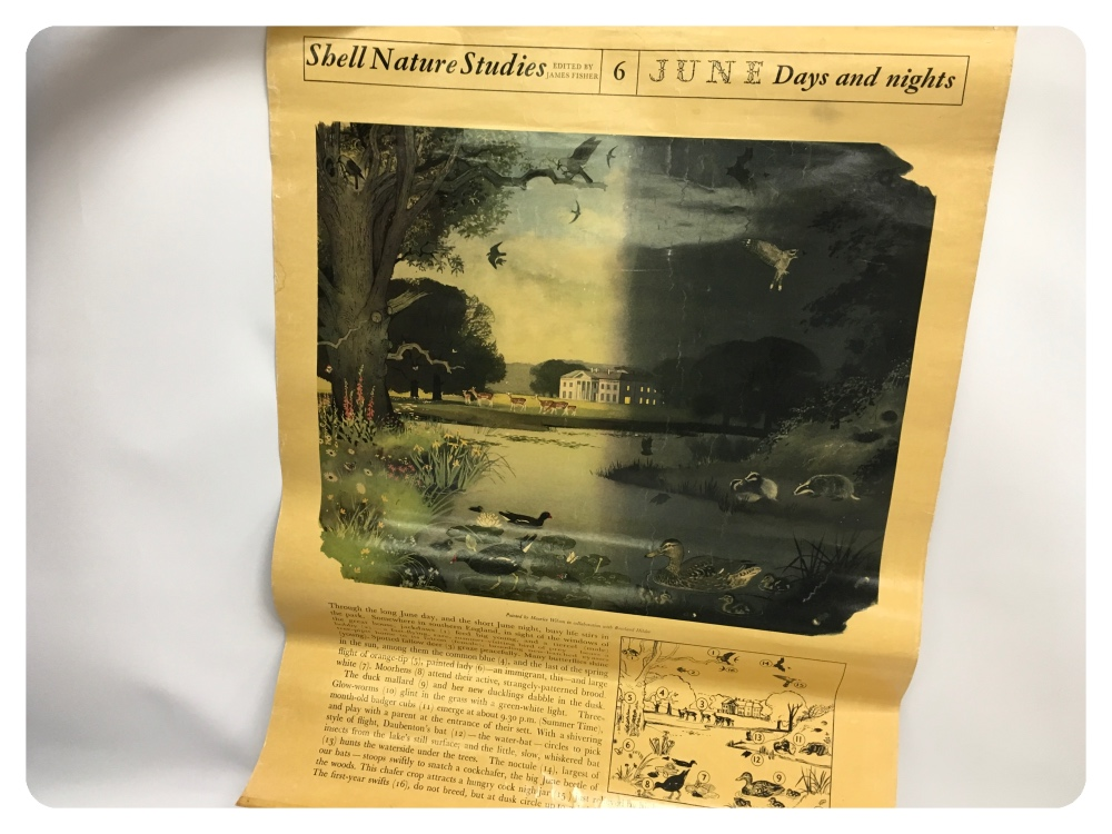 """Lot 50 - A COLLECTION OF 20 SHELL POSTERS, """"NATUR"""