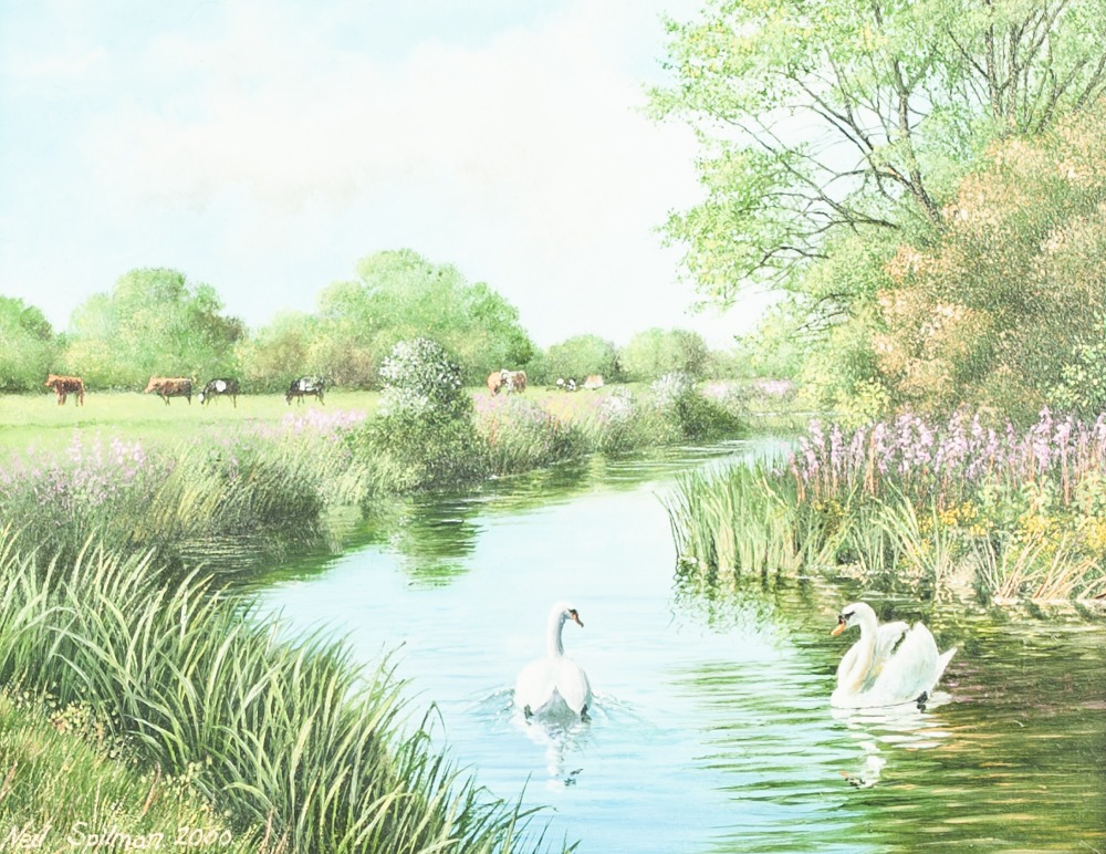 """Lot 243 - NEIL SPILMAN (b. 1951) OIL PAINTING ON BOARD 'Summer Water', swans on a river 5 1/2"""" x 7 1/2"""" (14"""