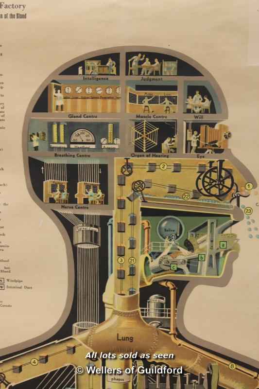 Lot 7272 - The Human Factory, a stylised scroll form diagram of the inner workings of the human body, copyright