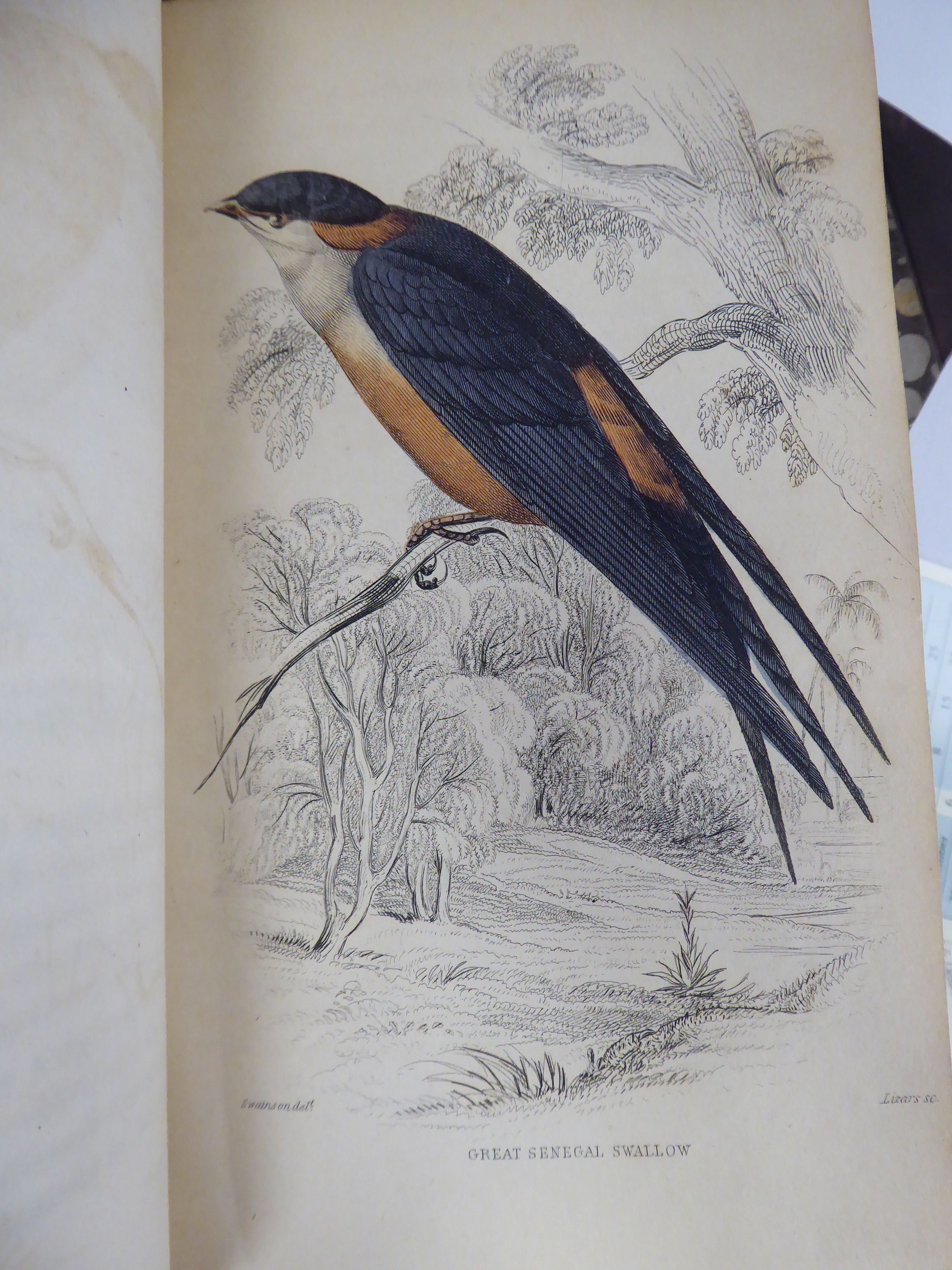Lot 46 - Books: 'Birds of Western Africa - The Naturalists' Library' by W Swainson,