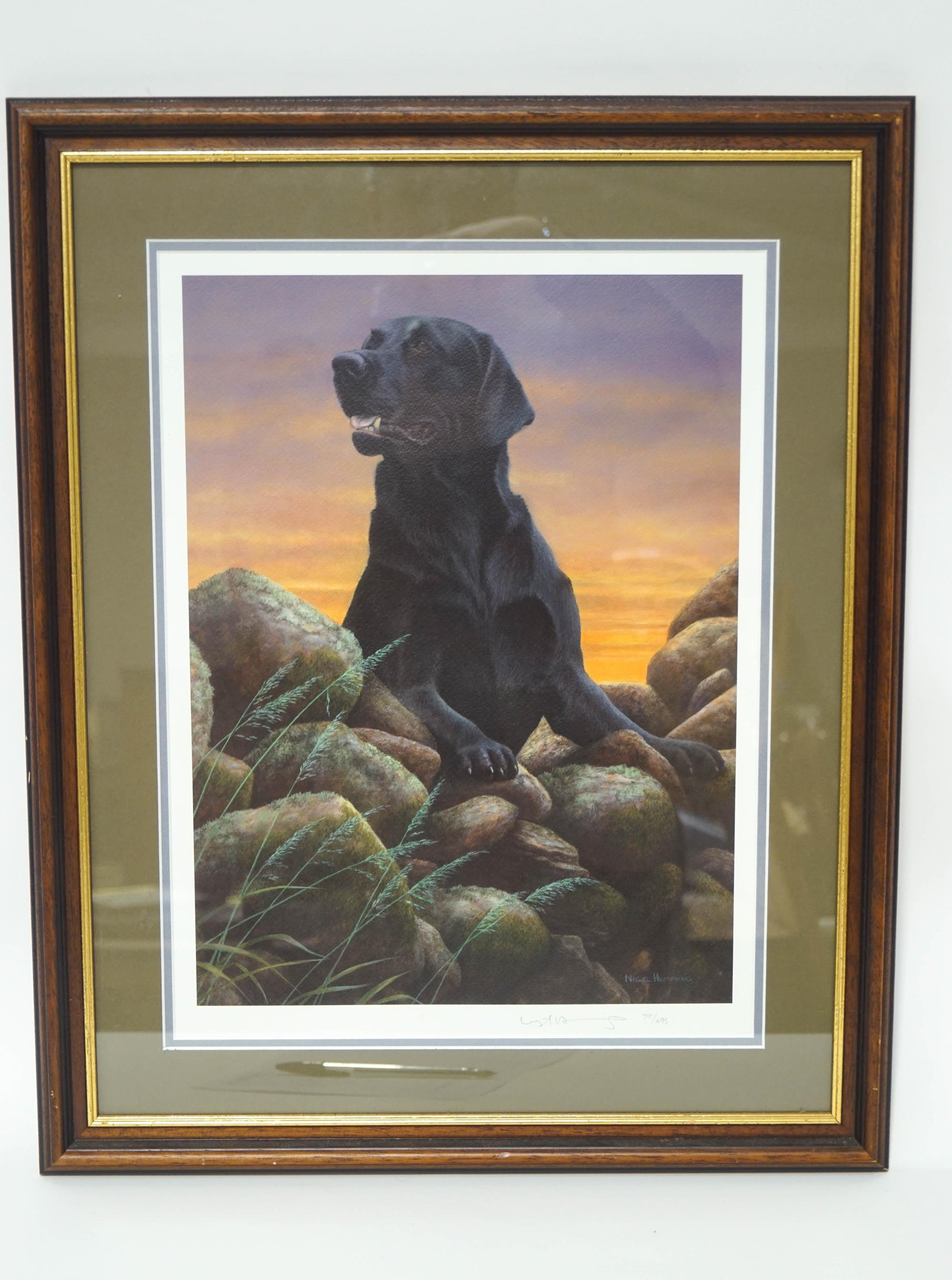 Lot 13 - Nigel Hemming Black Labrador Limited edition print,