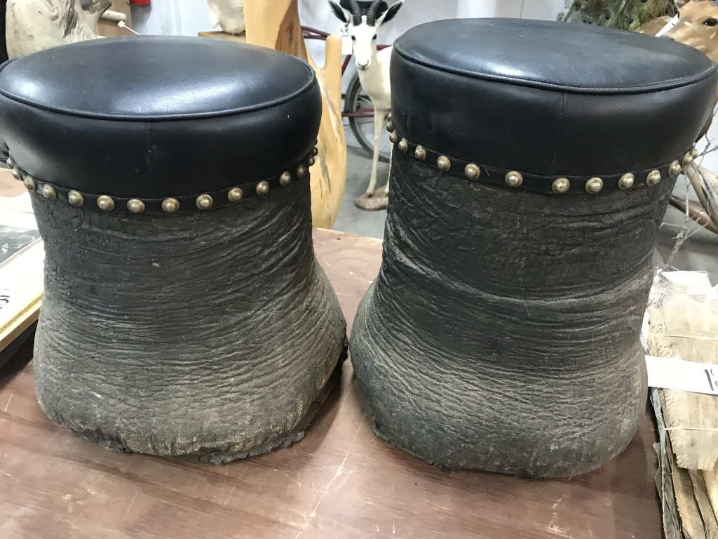 2 Elephant Foot Stools 2x Us Res Only Taxidermy