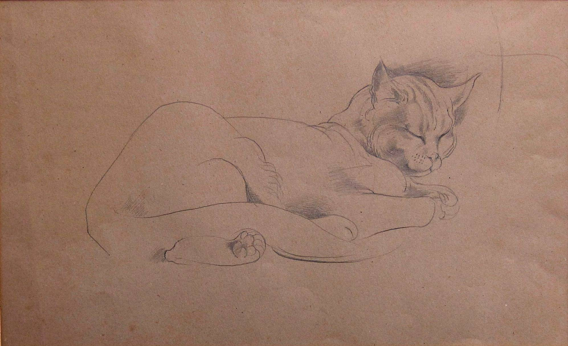 MICHAEL AYRTON [1921-75]. Cat Asleep, c.1953. Pencil on light brown paper. 32 x 51 cm [with mount