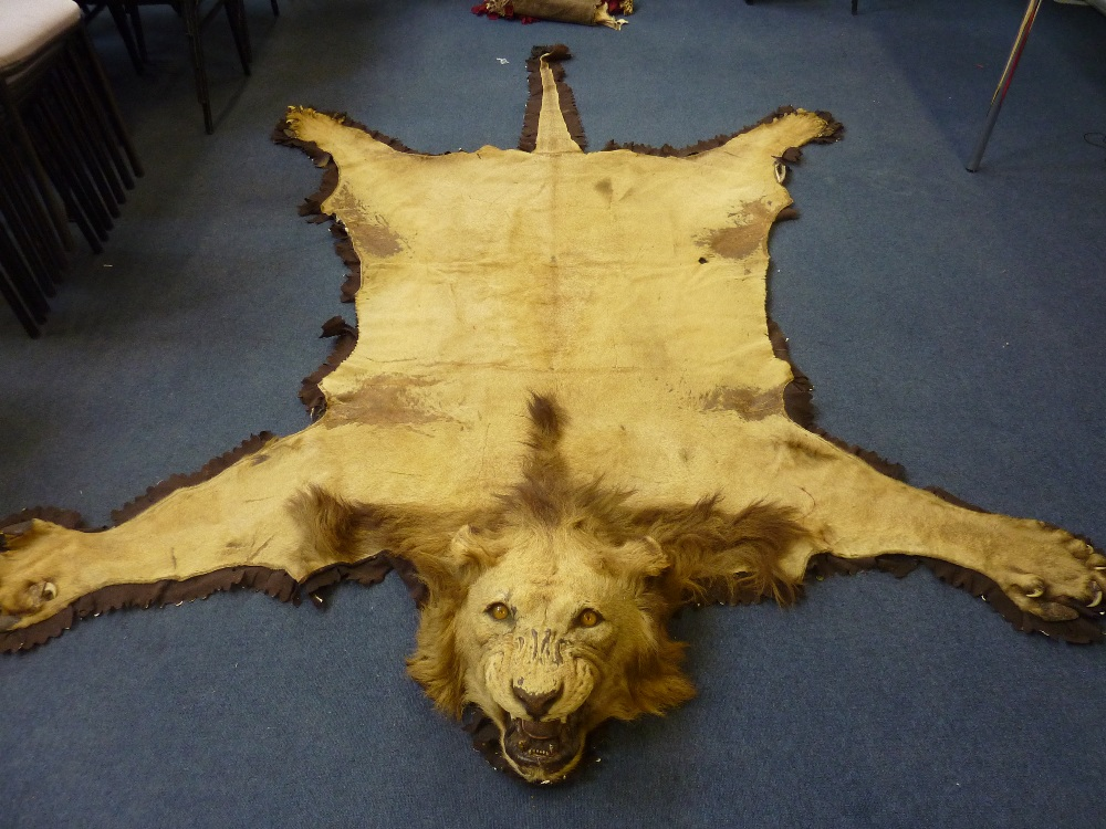 Lot 40   A LATE 19TH CENTURY LION SKIN TAXIDERMY RUG, Mature Male Lion  Complete