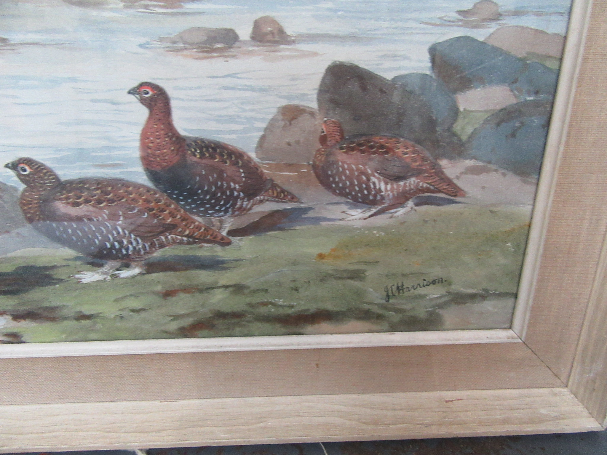 Lot 10 - JOHN CYRIL HARRISON The Burn Grouse and Roe deer Watercolour Signed Gallery label on the back 55 x